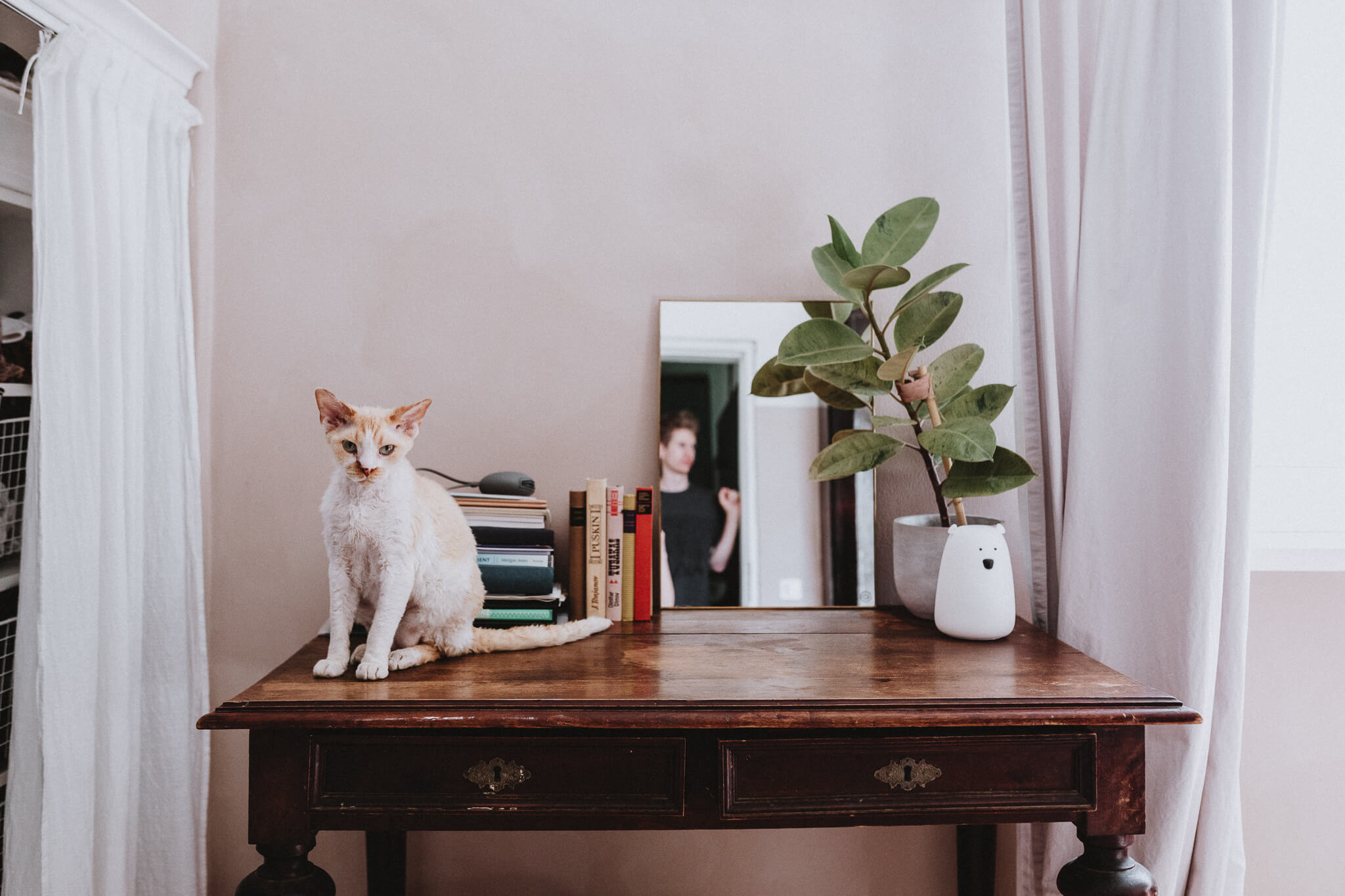 Kass oma Tartu kodus, istub kirjutuslaual raamatute ja kummipuu kõrval.
