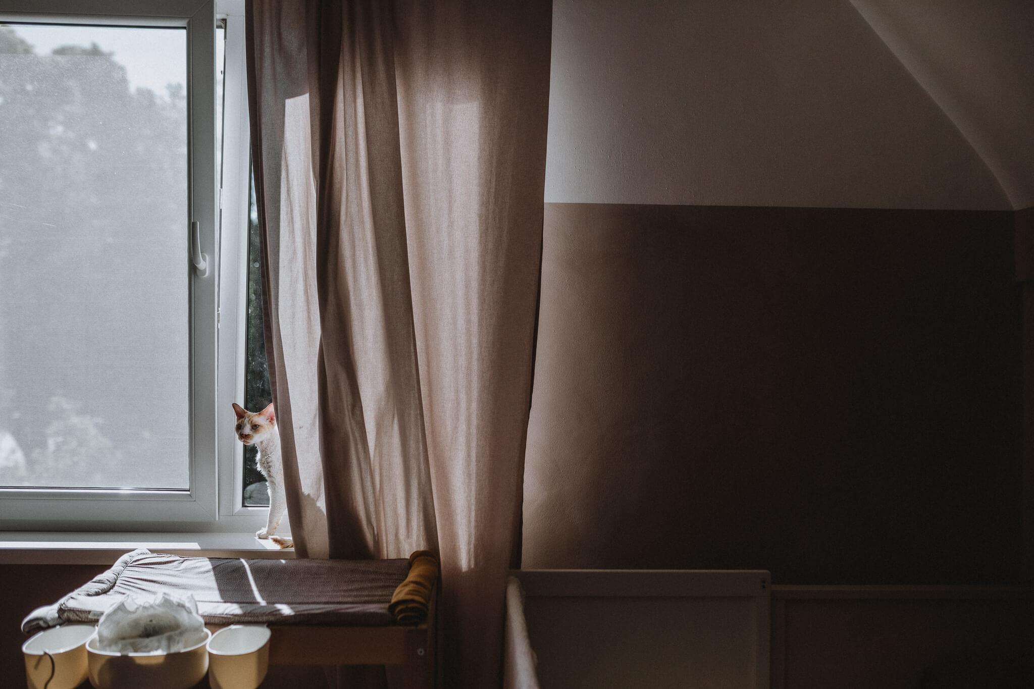 Kass piilub Tammelinna kodu aknalaual kardina tagant välja, Tartus.