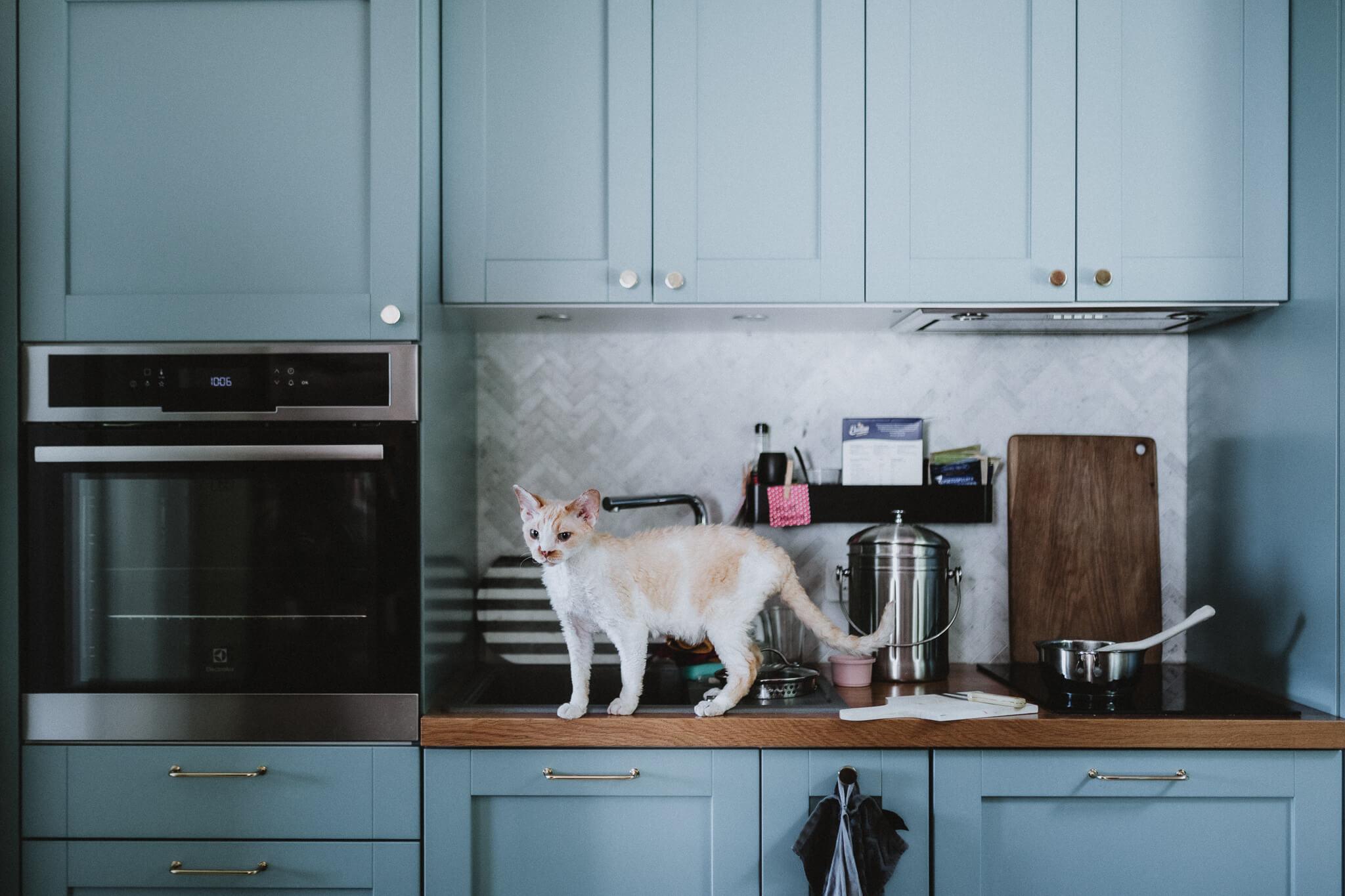 Foto Tartu köögist, kus kass kõnnib töötasapinnal