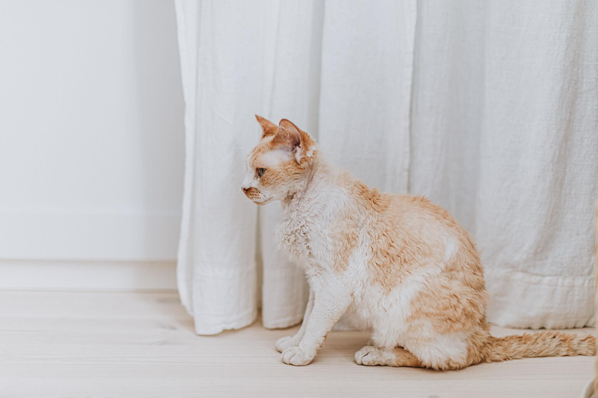 Heledates toonides foto kassist, kes seisab valgel põrandal, valgete kardinat ees.